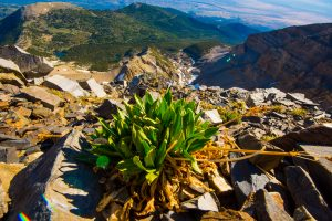 Wheeler Peak plant