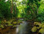 Hawaii2018DSC_1729-Pano